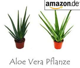 aloe vera pflanze wirkung anwendung saft gel kosmetik. Black Bedroom Furniture Sets. Home Design Ideas