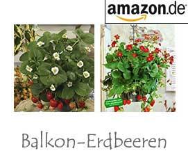 Balkon-Erdbeeren
