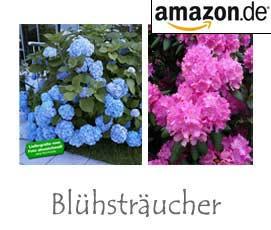 Blühsträucher