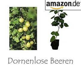 Dornenlose Beeren
