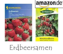 Erdbeersamen
