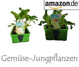 Gemüse-Jungpflanzen bei Amazon