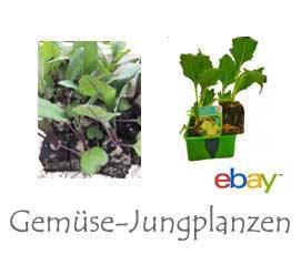 Gemüse-Jungpflanzen bei Ebay
