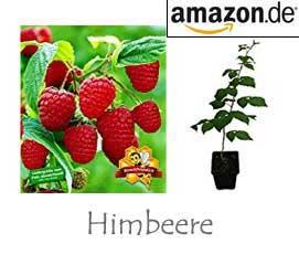 Himbeere