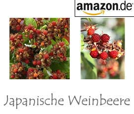 Japanische Weinbeere