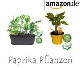 paprika samen pflanzen paprika pflanzen im eigenen garten. Black Bedroom Furniture Sets. Home Design Ideas