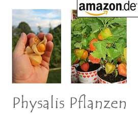 Physalis Pflanzen