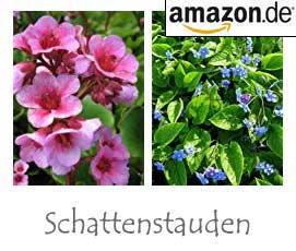 Schattengarten Welche Pflanzen Wachsen Im Schatten