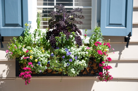 Balkon: Gemüse und Blumen im Blumenkasten